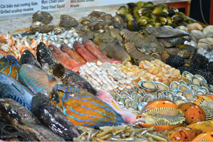 Spoilt for fish choice...