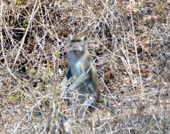Gotcha...roadside monkey...