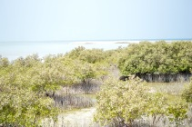 Small mangrove area...