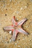 Starfish in the sand...
