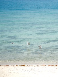 Turquoise sea and white sand...