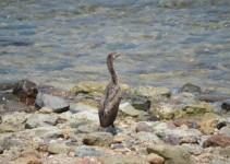 Heron on beach...
