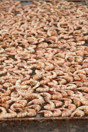 Prawns drying on roadside...
