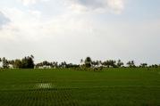 Rice fields...