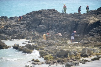 Collecting food from the reef at low tide...
