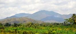 Green Lombok...