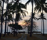 Sunset through the palms...