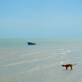 At the tip of Mannar, one dog and a boat...