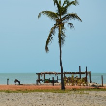 Donkeys on the beach too...