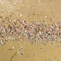 Shelling- the first footsteps down the beach...