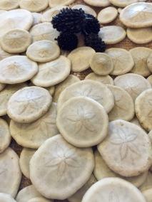 Small sand dollars, Con Dao, Vietnam...