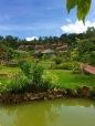 Daisy Resort...