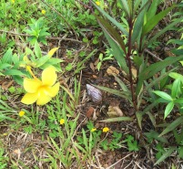 Flower and very large land snail...
