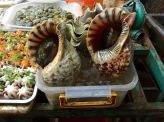 And Tritons for dinner, temptation for the shell was huge, but it didn't seem right somehow....