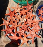 Dried starfish for sale by the port...