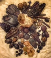 Sea Beans, fruits and Tonna....