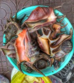 Lambis and chitons for sale in the fish market...