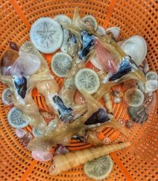 Selection of sand dollars, small shells and Malleus alba ... Con Dao, Vietnam...