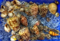 Lots of molluscs on ice,ready to be cooked...
