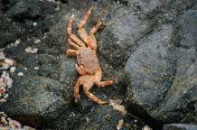 Colourful crab..