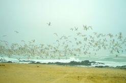 Seagulls in flight...
