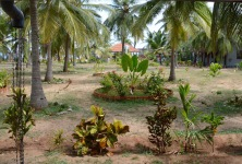 Jaffna hotel garden, very peaceful ..we were the only guests...