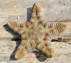 Beautiful starfish...