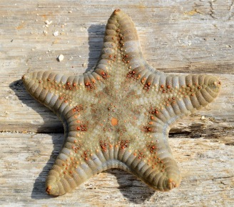 Beautiful starfish...