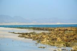 Early morning low tide, Masirah east coast, February 2015...