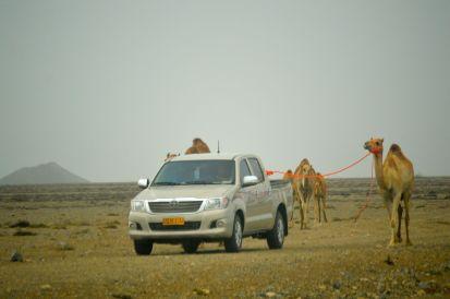 Camel walkies x 3...