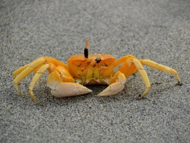 Who could resist this crab ...