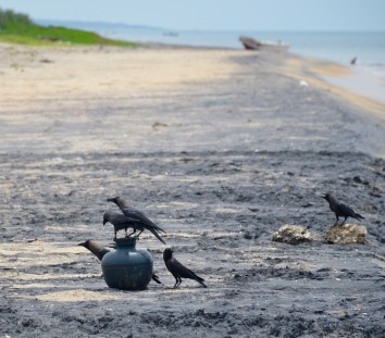 Black birds, pot and sand....