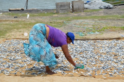 drying fish..