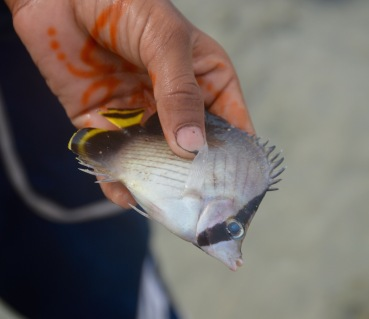 Small boy found me a reef fish...