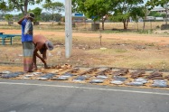 Fish drying on the road side...
