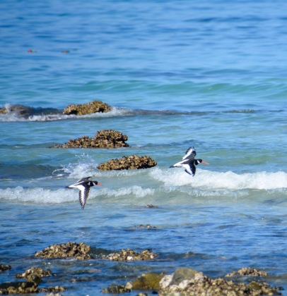 More birds,Masirah, December 2015...