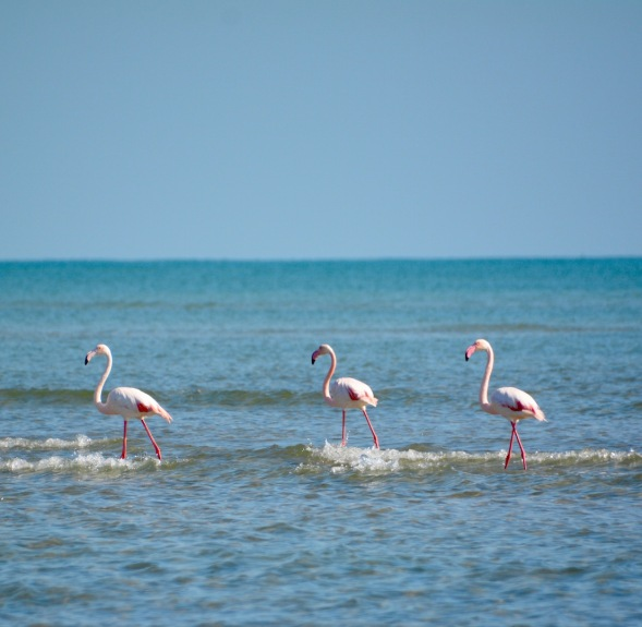 The Flamingo three...