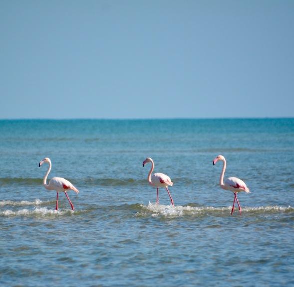 The Flamingo three...