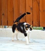 Cat 2...