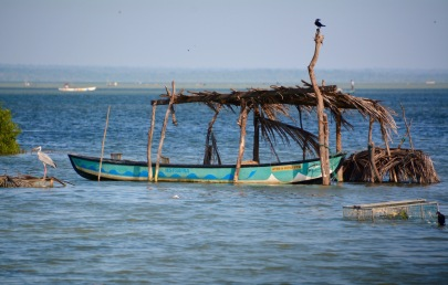 Birds on Puttalam lagoon...