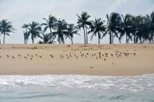 Windswept palms...