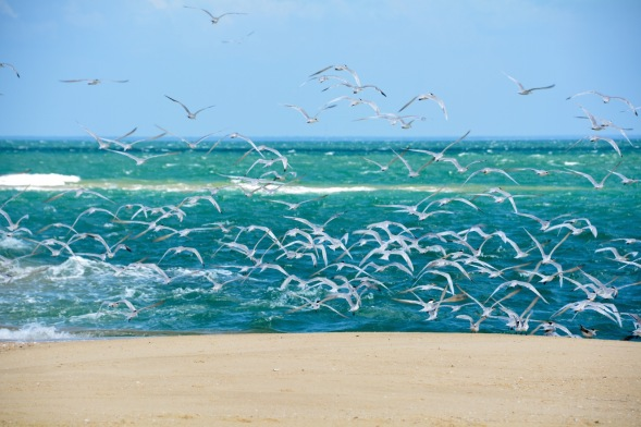 1-Birds and rough seas, movement everywhere...
