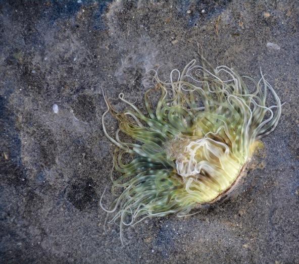 Fan worm at low tide......