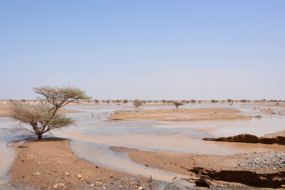 A rare opportunity to see the desert flooded, recent March storms turned it into a flood plain...