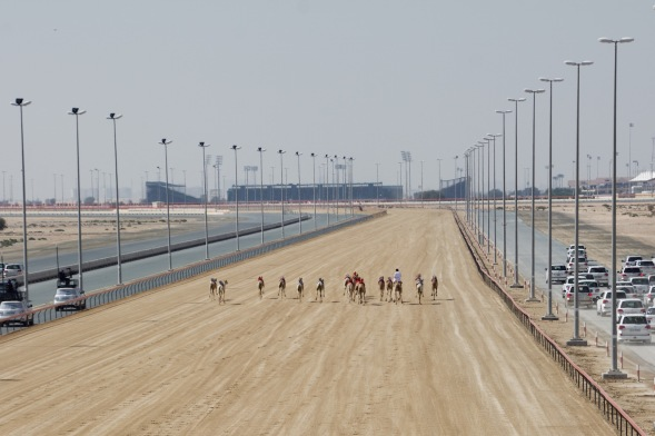 Camel racing at Lisali...into the flat...