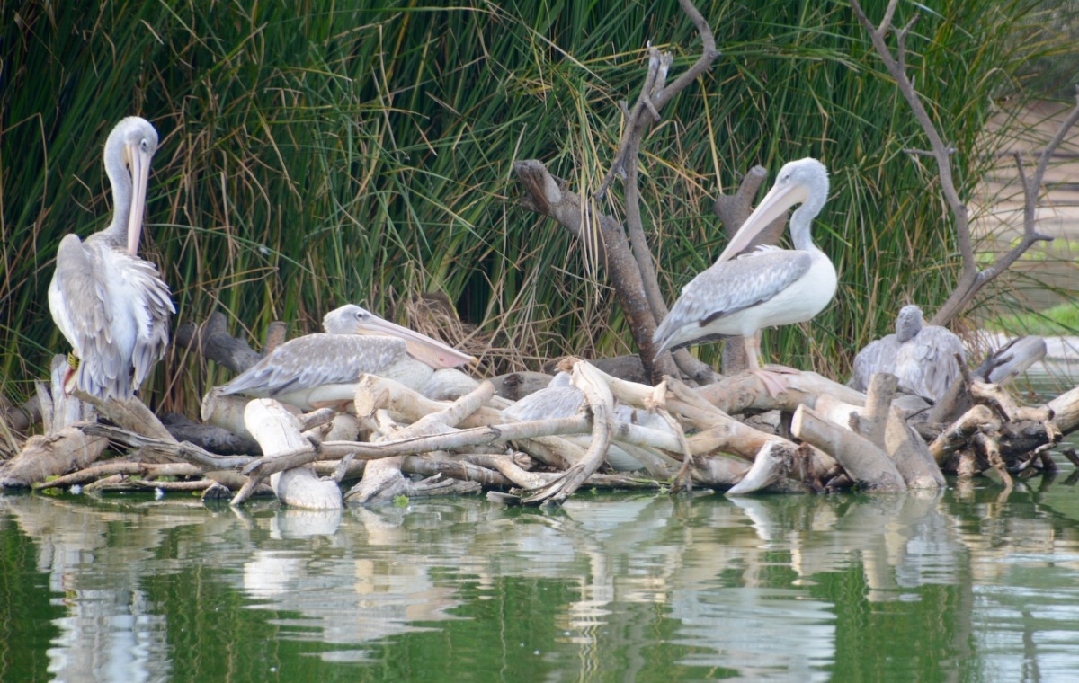Wasit Wetland Centre, Sharjah, UAE....