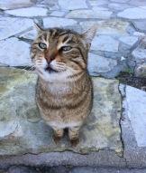 Cat 1....