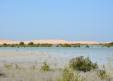 Mangroves at Umm Al Quwain......