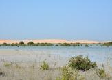 Mangroves at Umm Al Quwain......