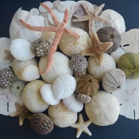 A to Z Challenge: E is for Echinoderm